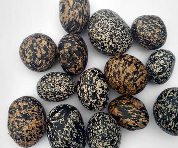 Birds Eggs Pebbles San Diego