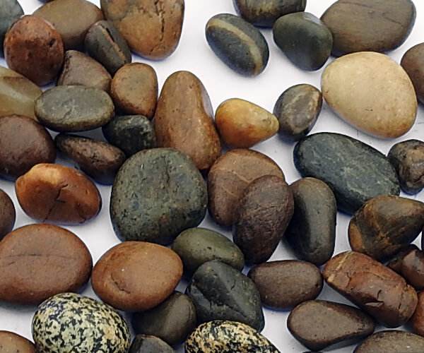 San Diego Brown Pebbles