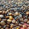 Brown Pebbles San Diego